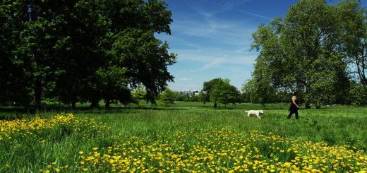 1024px-Wildlife_meadows_in_Regent27s_Park_in_London2C_June_2013_28829.jpg