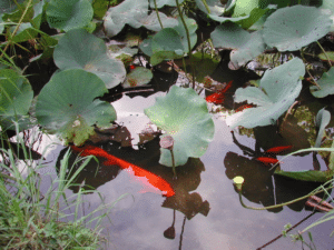 Jardin botanique de Rome : Belle balade au vert [Trastevere]