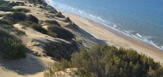 1024px-Costa_Parque_Natural_Doñana.jpg