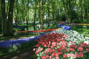 Jardin de Keukenhof près d'Amsterdam : le triomphe fleuri !