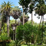 6 plus beaux jardins de Lisbonne : Botanique, secret ou populaire