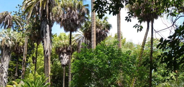 1024px-Lisbon_botanical_garden_21.jpg