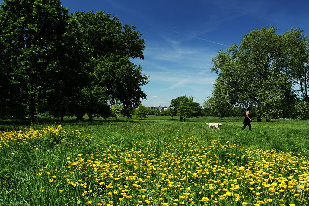 En été dans le Regent's park à Londres.