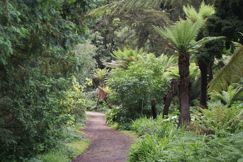 Golden Gate park à San Francisco et son jardin japonais