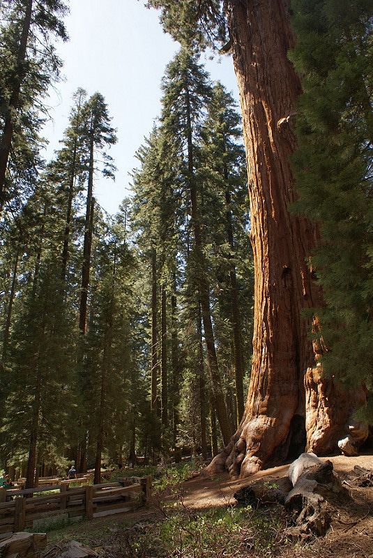 Sequoia National Park, la forêt de géants