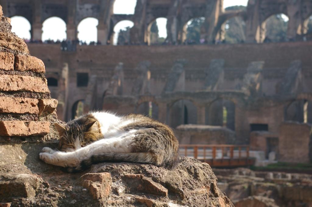 Rome et ses chats, leur histoire et où les trouver ?