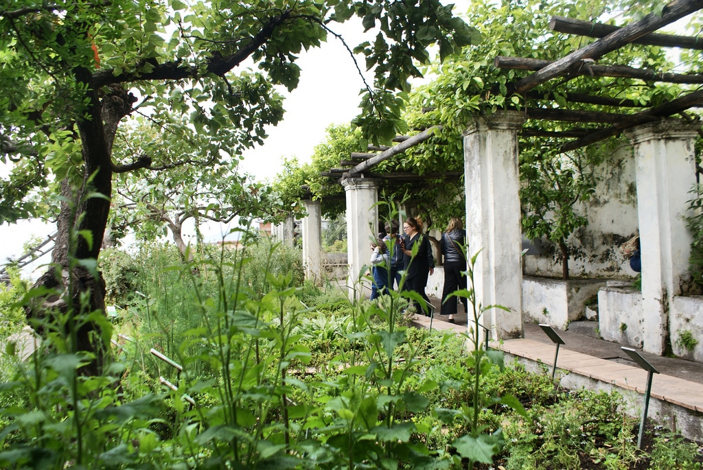 Jardin botanique de la Minerva à Salerno (côte Amalfitaine)