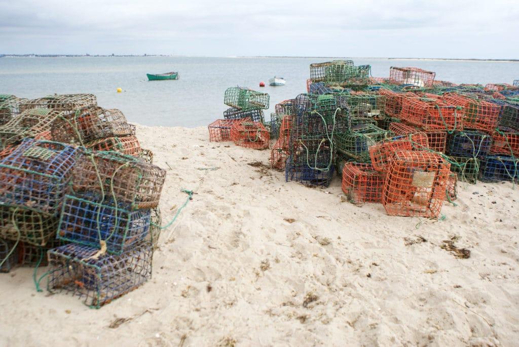 Dans le port de pêche de l'Ilha da Culatra.