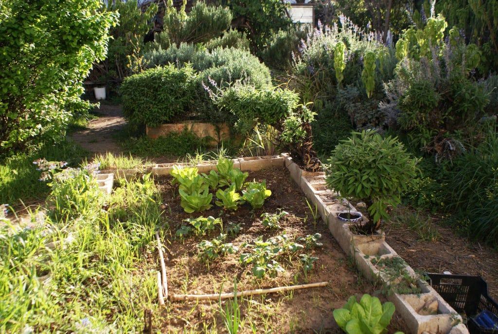 """Dans la partie """"potager"""" du jardin partagé d'El Huerto del Rey Moro à Séville."""