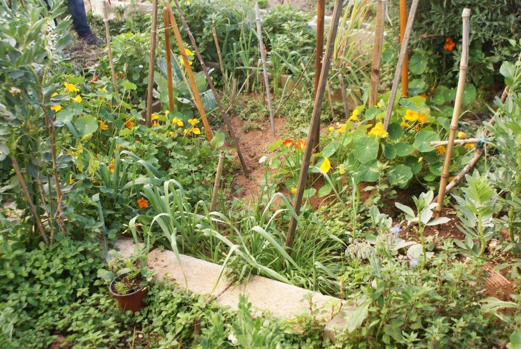 Capucines et plantes diverses dans le jardin du roi Maure à Séville.