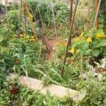 Jardin du roi Maure à Séville : Jardin partagé luxuriant [Alameda]