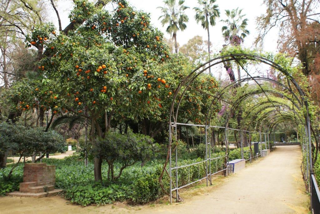 Végétation luxuriante dans le parc Maria Luisa de Séville.