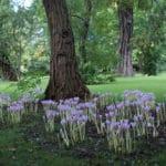 Insolite jardin botanique Landbohøjskolens à Copenhague [Frederiksberg]