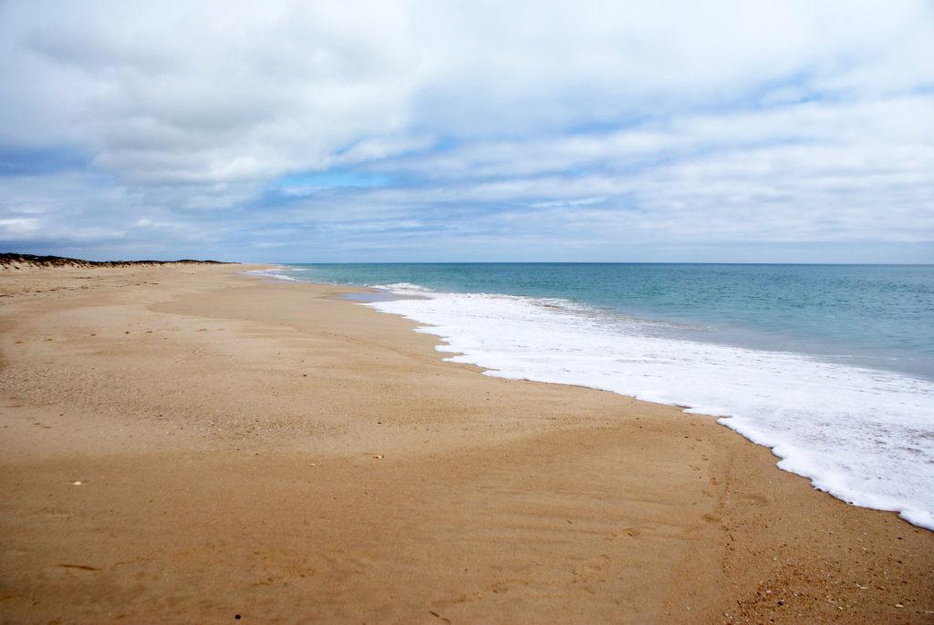 Plage vide de l'île de Culatra avec de belles vagues et de jolis coquillages.