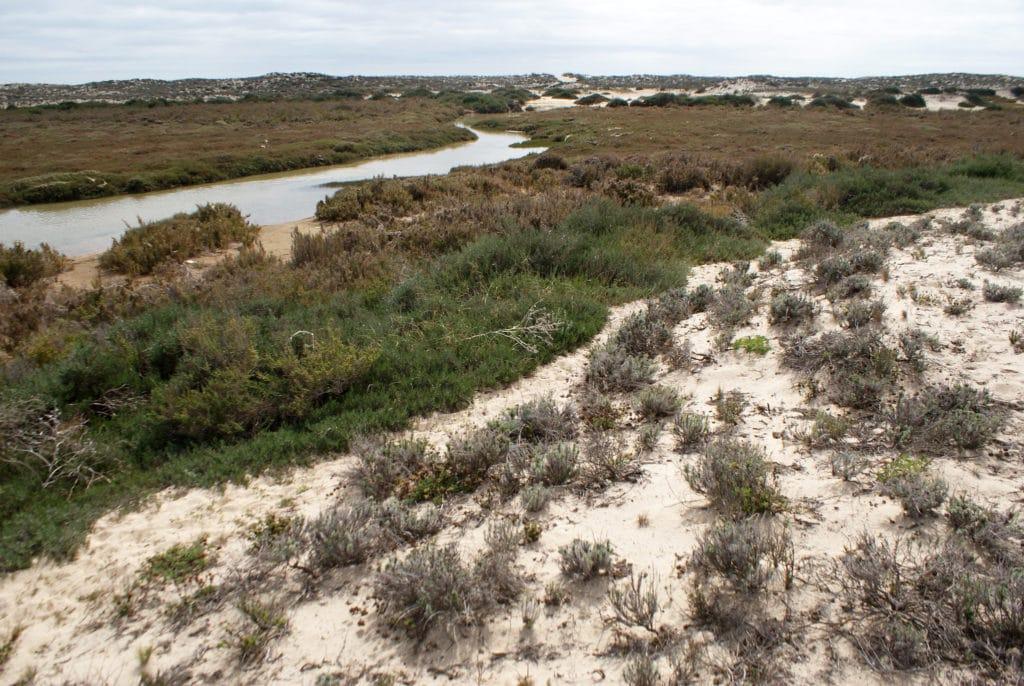 Des sentiers traversent l'île, il est possible de les emprunter à condition d'éviter de marcher sur les plantes.