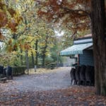 Parc du Valentino à Turin et son jardin botanique [San Salvario]