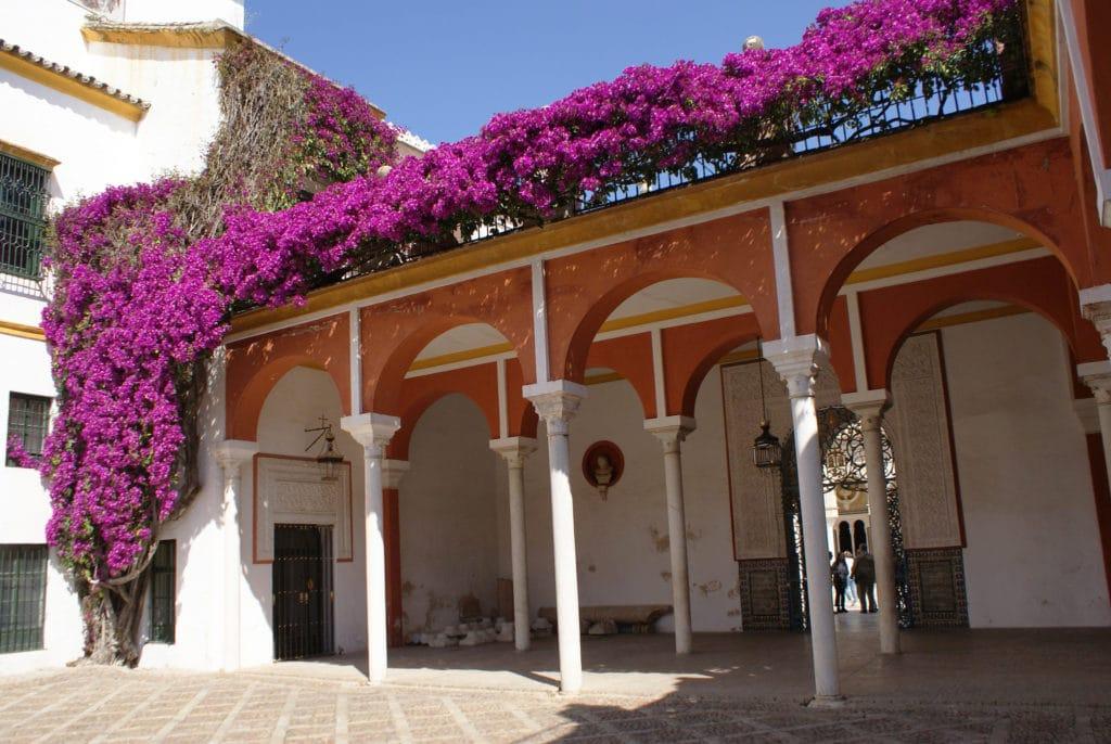 Bougainvillier sur une galerie de la Maison de Pilate à Séville.