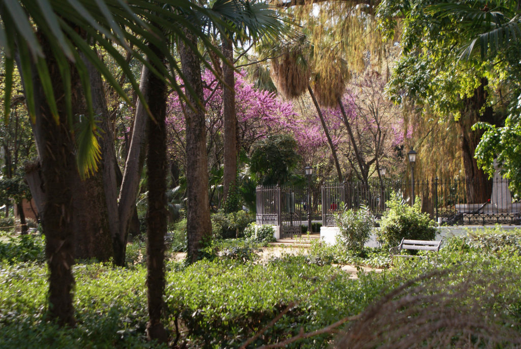 > Arbre de judée en fleur dans le parc Maria Luisa de Séville.