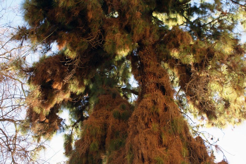 > Dans le jardin botanique de Grenade.