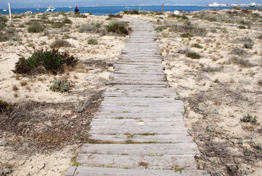 Sur l'île déserte ou Ilha deserta près de Faro dans le Rio Formosa.