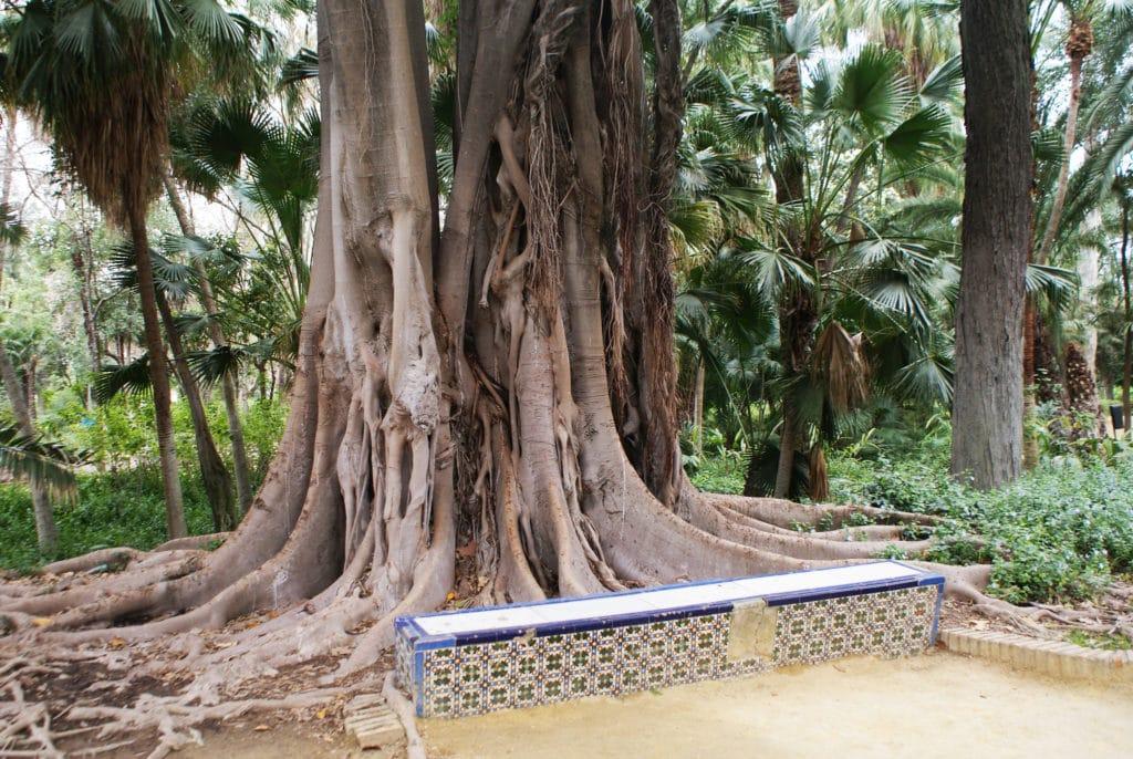 A côté des hommes et parfois contre leur oeuvre la nature a nourri des monstres comme le ficus macrophylla du parc Maria Luisa de Séville.