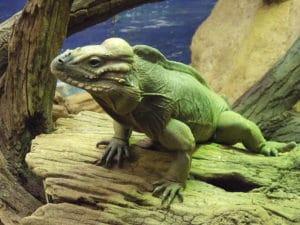 Zoo de Londres : Reptiles, papillons, insectes & lions !