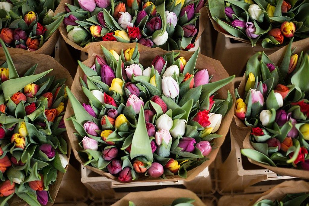 Tulipes au Bloemenmarkt, marché aux fleurs dans le quartier des canaux à Amsterdam - Photo d'Alice Achterhof