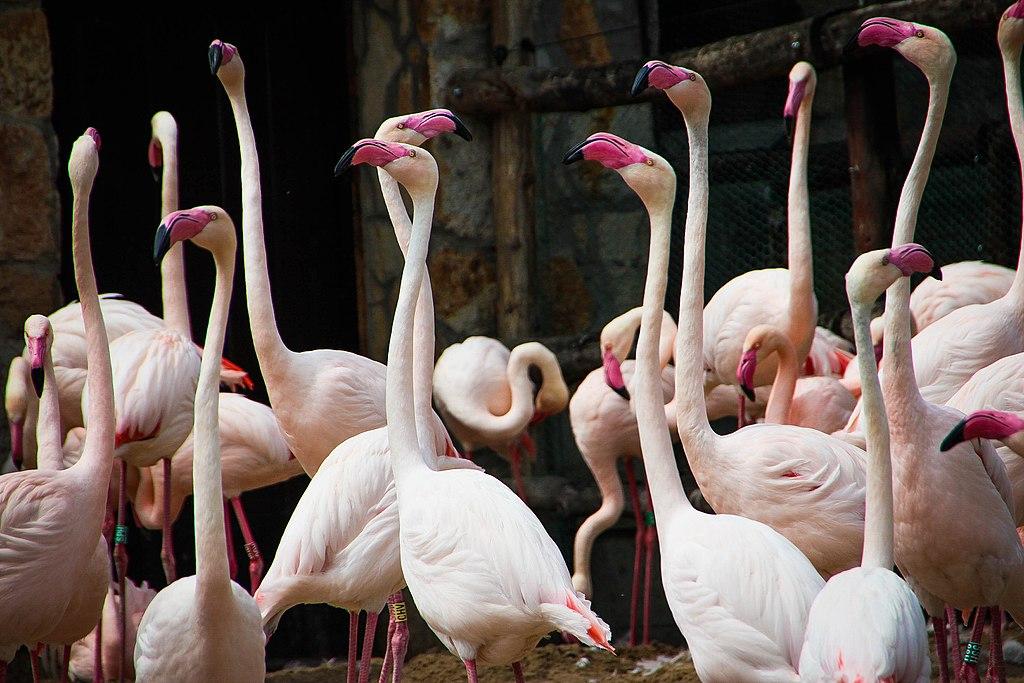 Zoo de Budapest dans le parc de Varosliget - Photo de Rosie Fraser