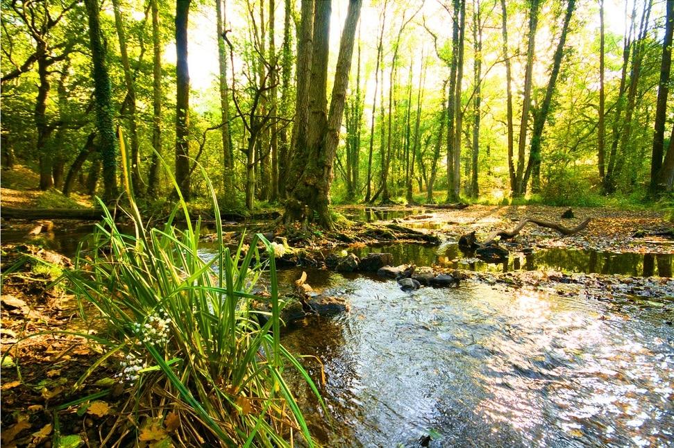 Lieux d'inspiration pour la création d'Harry Potter : Rivière dans la Forest à Dean - Photo de Tom C
