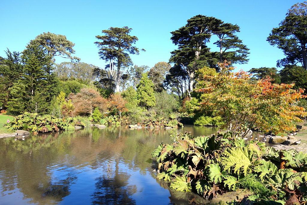 Jardin botanique du Golden Gate Park à San Francisco.