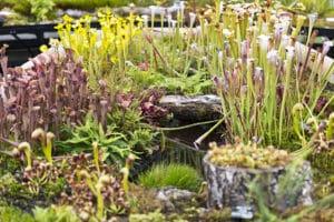 Jardin botanique de Glasgow : Au bonheur des plantes [West End]