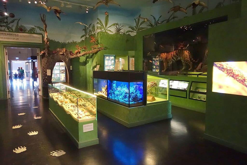 Intérieur du Musée d'histoires naturelles à Stockholm - Photo de Daderot