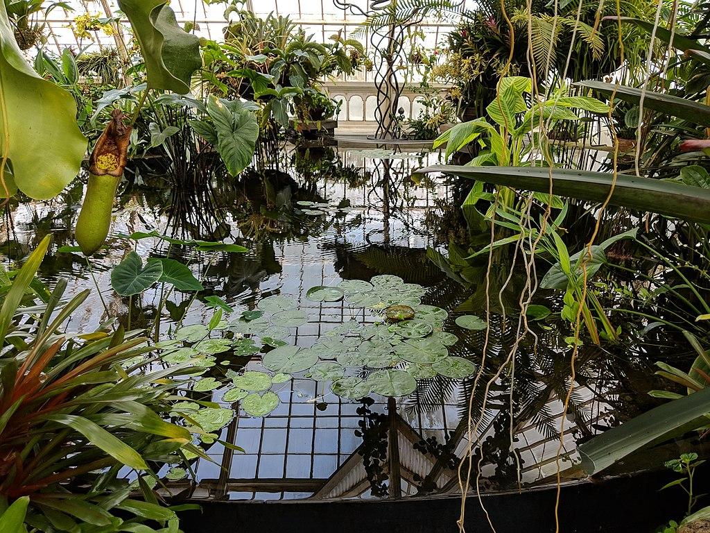 A l'intérieur du Conservatoire des fleurs de San Francisco au Golden Gate Park.