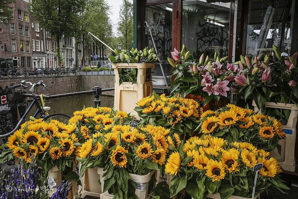 Bloemenmarkt, marché aux fleurs dans le quartier des canaux à Amsterdam - Photo de Véronique Mergaux