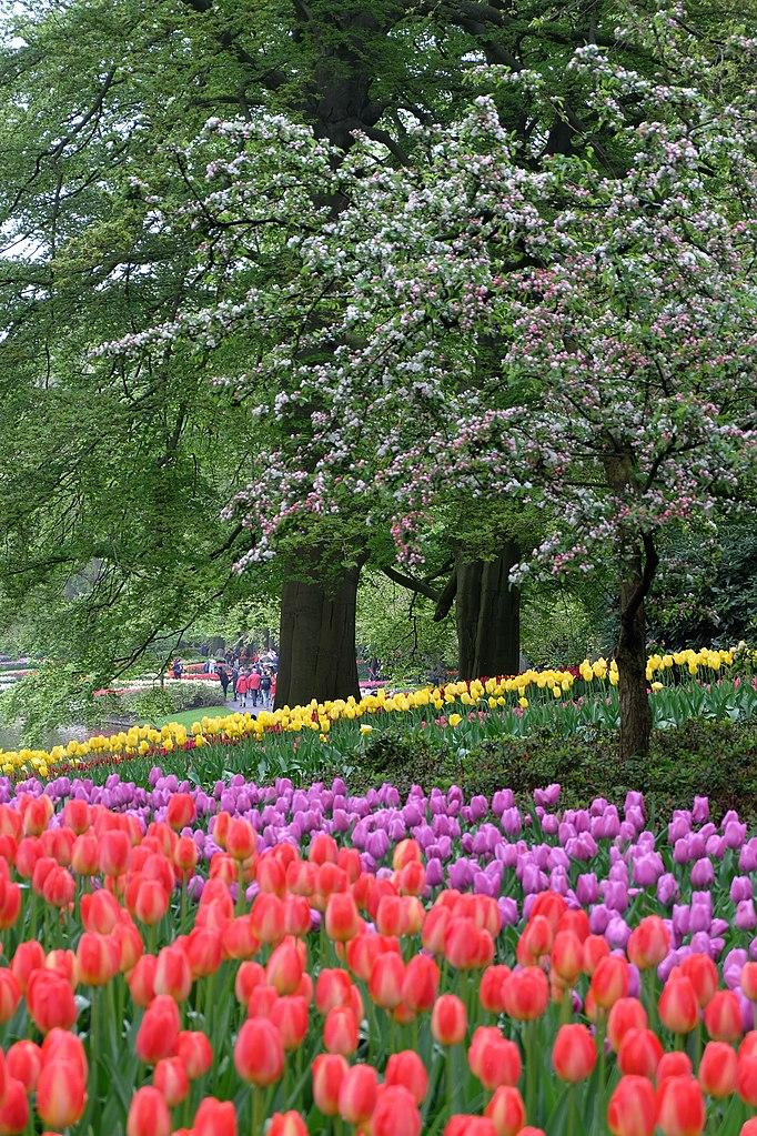 Jardin Keukenhof près d'Amsterdam aux Pays-Bas au printemps - Photo de Julien Chatelain