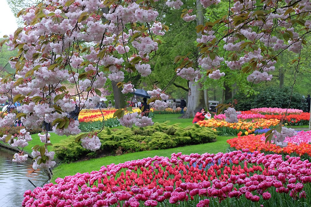 Dans le jardin de Keukenhof près d'Amsterdam - Photos de Julien Chatelain