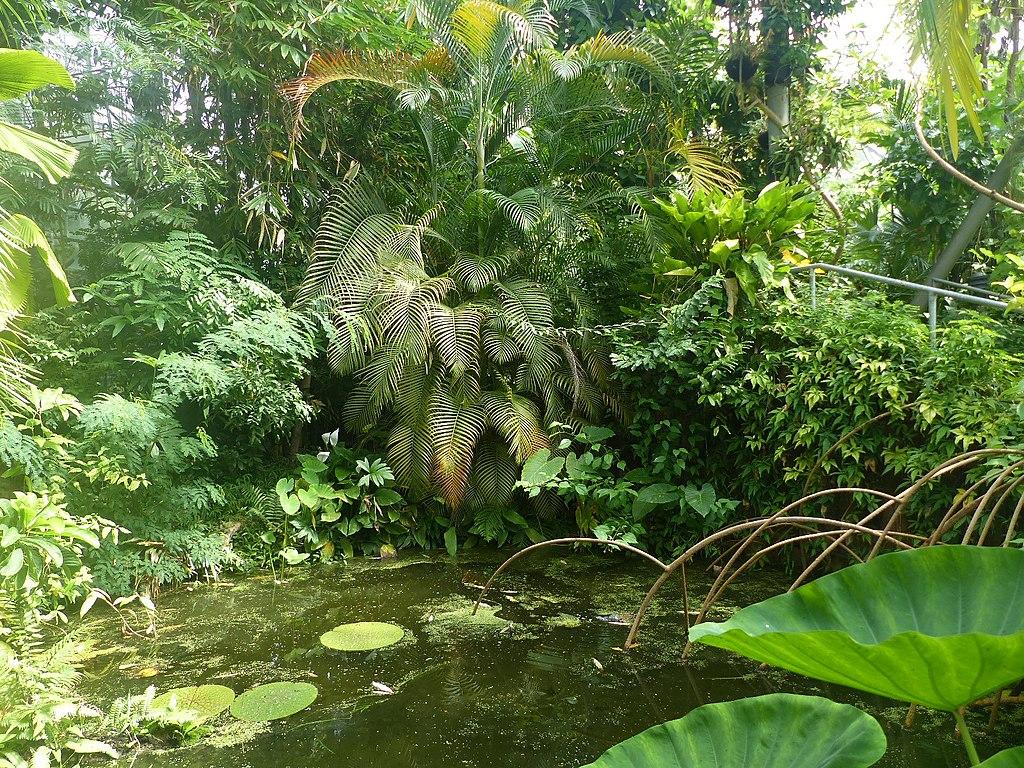 Dans les serres tropicales du jardin botanique Hortus Botanicus dans le quartier de Plantage à Amsterdam - Photo de Elekes Andor