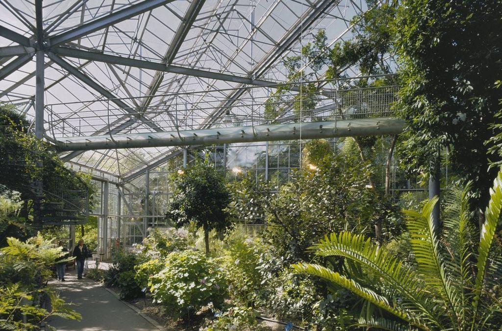 Dans une serre du jardin botanique Hortus Botanicus dans le quartier de Plantage à Amsterdam - Photo de Hoogewoud-R