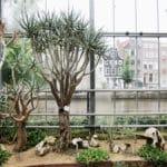 Hortus Botanicus : Joli jardin botanique à Amsterdam [Plantage]