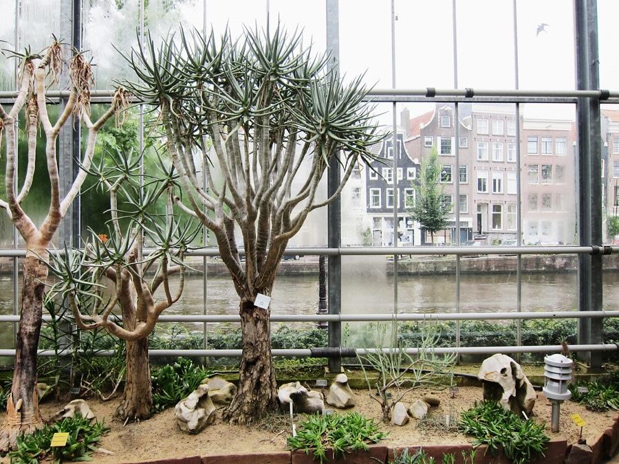 Hortus botanicus, le jardin botanique d'Amsterdam - Photo prise par Wardie Hellendoorn@Flickr