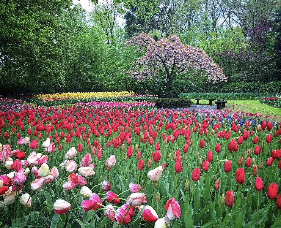 Parc de Keukenhof près d'Amsterdam - Photo d'Elena Laps