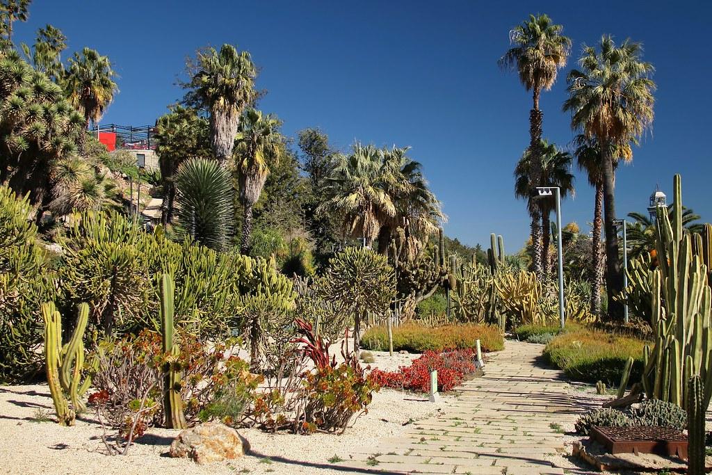 Cactus et succulentes dans le Jardins de Mossèn Costa i Llobera sur la colline de Montjuic à Barcelone - Photo de Jorge Franganillo