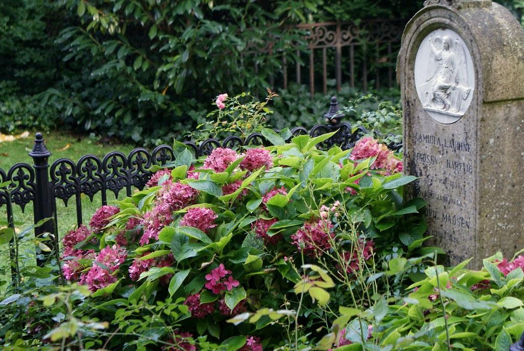 Stèle et hortensias au cimetière Assistens Kierkegaard à Copenhague.