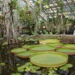 Jardin botanique de Cracovie : Belle expérience !