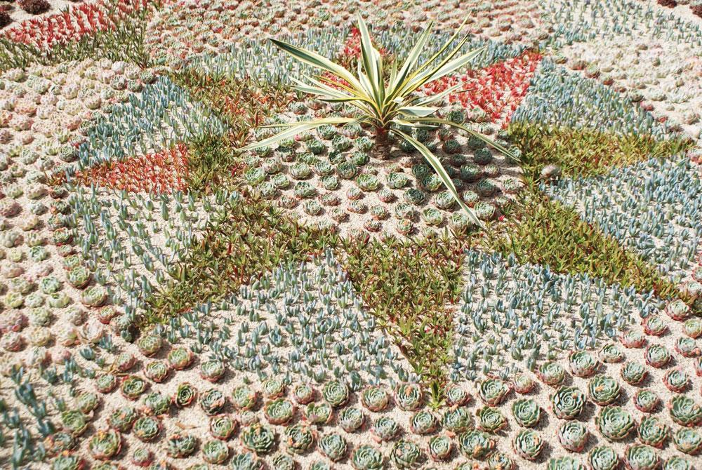 Frise réalisée en plantes grasses au jardin botanique de Dublin.