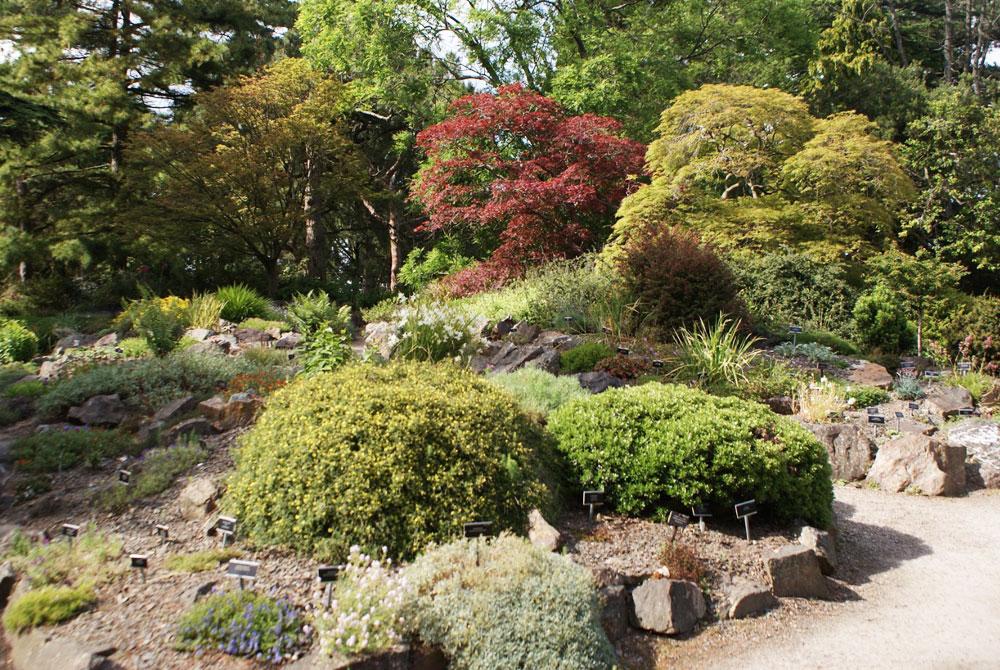 Jardin de rocaille avec deux superbes érables dans le jardin botanique de Dublin