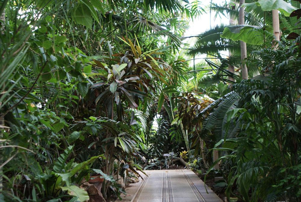 Jardin botanique de Dublin