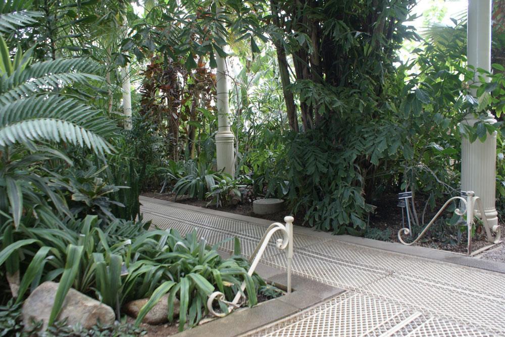 A l'intérieur des serres du Jardin botanique de Dublin