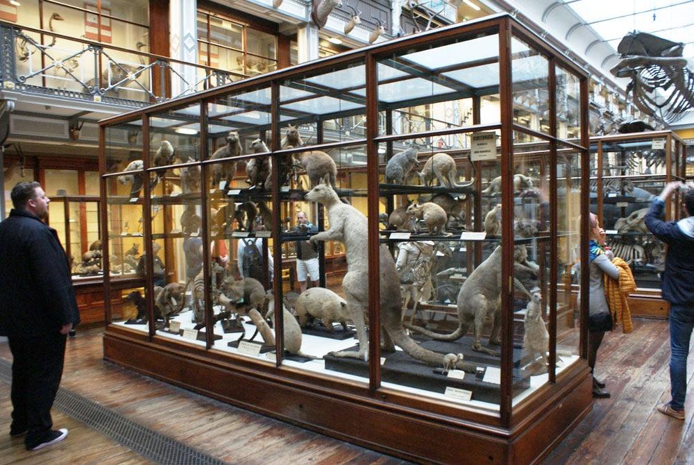 > Musée d'histoire naturelle de Dublin