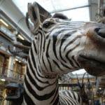 Musée d'histoire naturelle de Dublin : Etonnant «zoo mort»